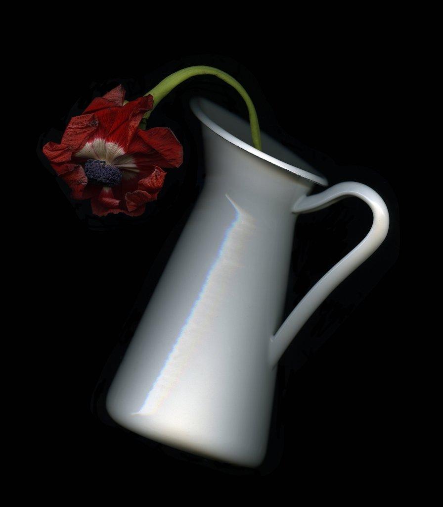 Fiore, fiore rosso, fiore appassito, brocca, brocca bianca, fondo nero, salto, fuga.